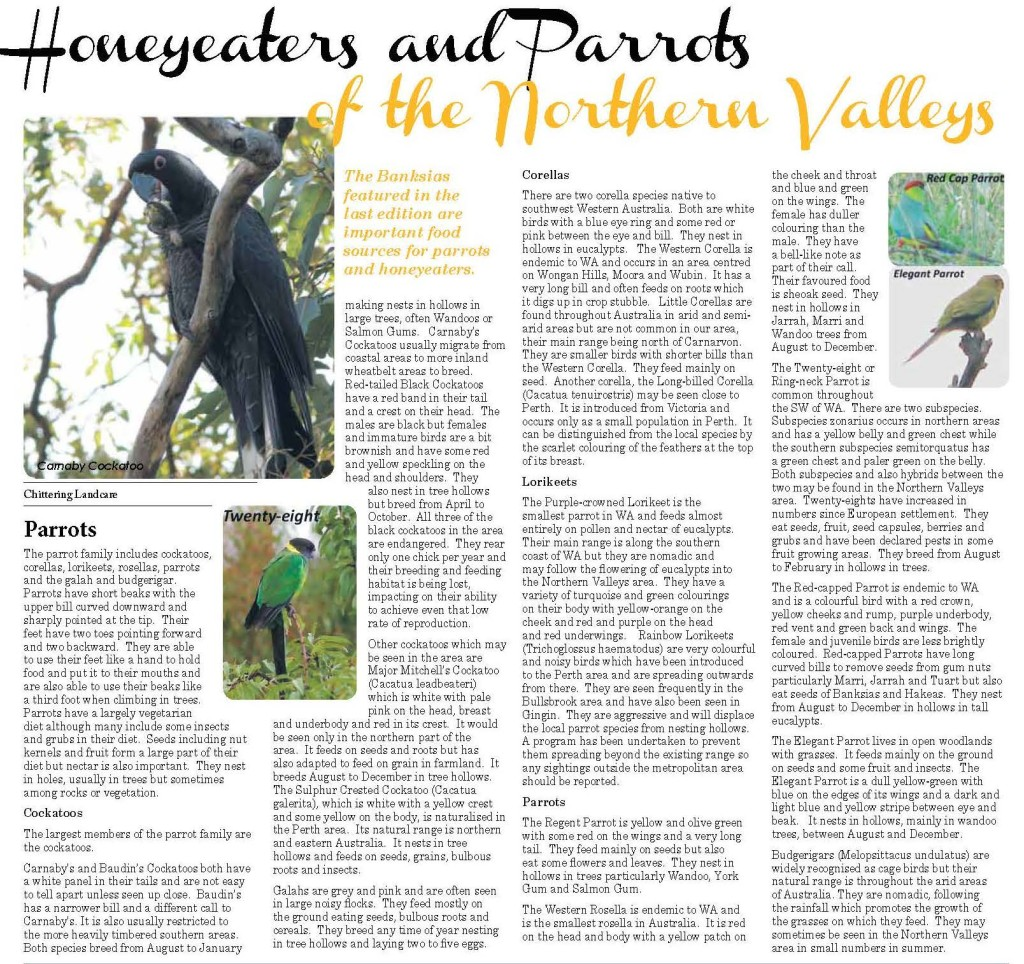 Birdwatching_Page_1