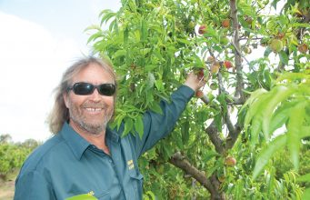 Michael Liddelow at Gingin Nursery picking peaches