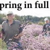 WILDFLOWERS BINDOON NORTHERN VALLEYS