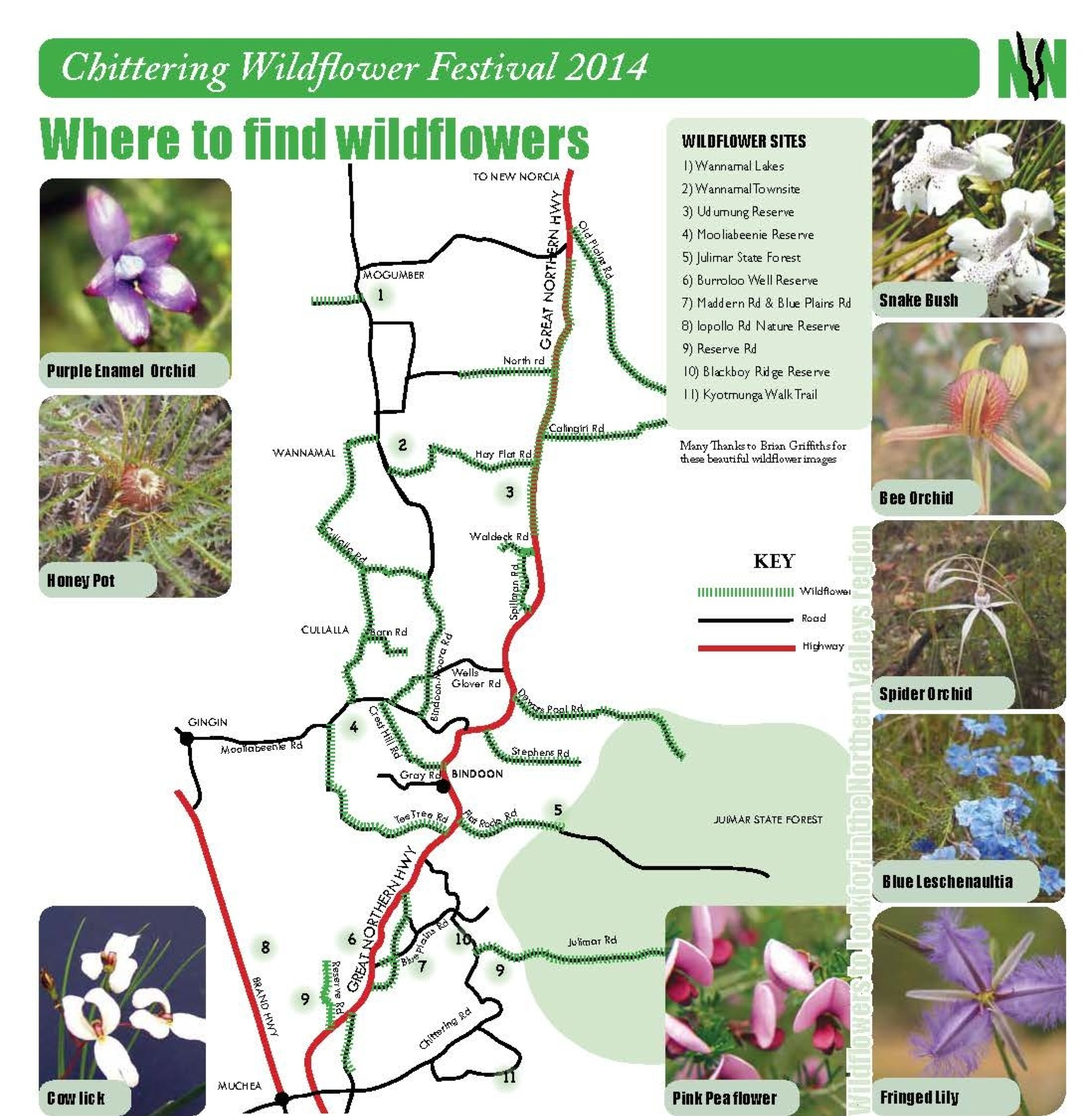 wildflower web